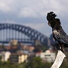 The Aussie Cockatoo by Adam Gormley