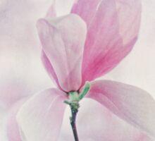 Magnolia Blossom Sticker