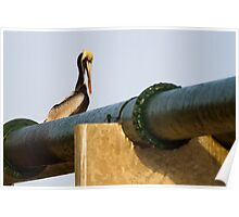 Brown Pelican on Green Pipe Poster
