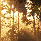 Autumn Sunrise in Rendlesham Forest by MichelleRees