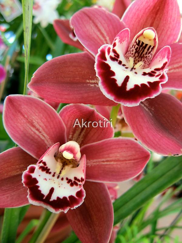 Red Beauty - cymbidium orchid by Akrotiri