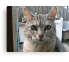 The cat who is looking out of the window Canvas Print