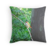 ~ Red-browed Finch ~ Throw Pillow