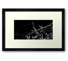 Black and White Barb Framed Print