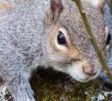 Squirrel on a Branch Sticker