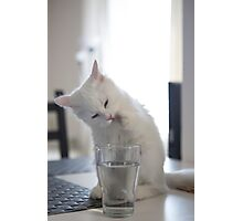Odette Drinking Photographic Print