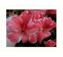 Pink Azaleas- (Taken By Sarah, 19 months old) Art Print