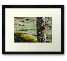 Gatlinburg Tree Framed Print