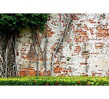 Brick, Plaster, and Vines Photographic Print