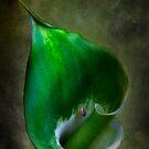 Green Goddess 2 by Ian English