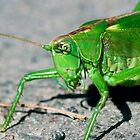Green locust on the ground by Dfilyagin