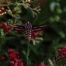 Moth in a Desert Garden by DHParsons
