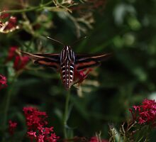 Moth in a Desert Garden by DHParsons