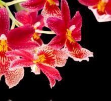 Orchid - 45 Sticker