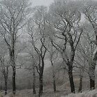 Winter on Darwen moor  by michaelwallwork