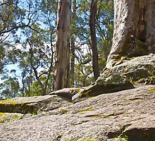 Tree in the Rock - Porongorups by pennyswork