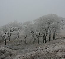 Frosty day on Darwen moor, Lancashire,  by michaelwallwork