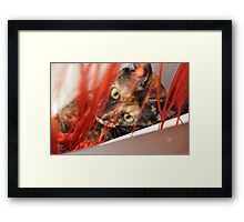 Mia the naughty cat Framed Print