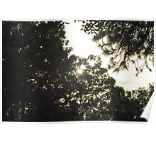 Hiding behind the trees Poster