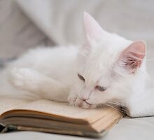 Odette Reading a Book by cat-odette