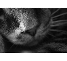 Nose Photographic Print