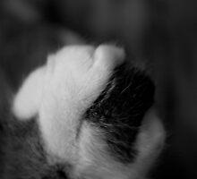 Gray Toe by thinkhmm