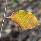 Fall's GOLD by Diane Trummer Sullivan