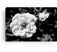Flower Shadows Canvas Print