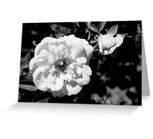 Flower Shadows Greeting Card