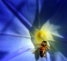Beauty & the Bee... by LindaR