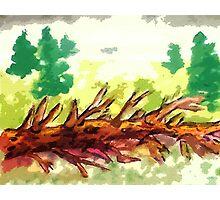 Fallen tree #2, watercolor Photographic Print