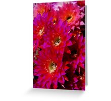 A Dozen Echinopsis Greeting Card