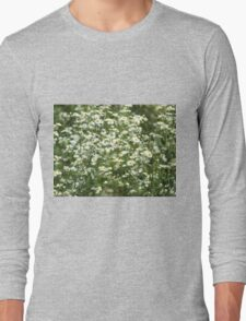 Herbs on the lawn - camomile flowers Long Sleeve T-Shirt