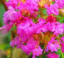 Extreme coloured blossom by Bernhard Matejka