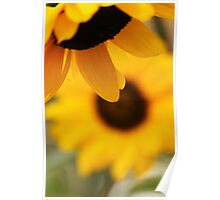 Sun Flowers at their best Poster