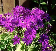 Flowers in my garden! by weecritter