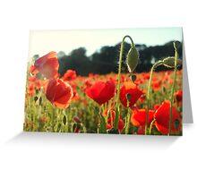 Beautiful poppies! Greeting Card