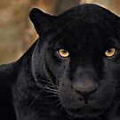 The Black Panther by Wojciech Dabrowski