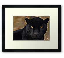 The Black Panther Framed Print