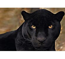 The Black Panther Photographic Print