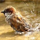 Splasher-splash by steppeland