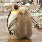 Mum & baby...Penguins by weecritter