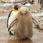 Mum & baby...Penguins by weecritter