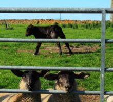 Farm Animals Sticker