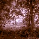 Through the Trees by JMontrell