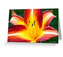 Red and Yellow Daylily Greeting Card