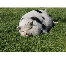Phat Pig Photographic Print