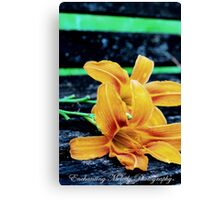 Something lovely is in the air. Canvas Print