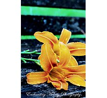 Something lovely is in the air. Photographic Print
