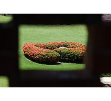 Flower Bush Photographic Print